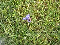 PikiWiki Israel 29910 Plants of Israel.JPG