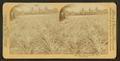Pine apple gardens, Fla., U.S.A. Ananas Garten, from Robert N. Dennis collection of stereoscopic views 2.png