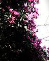 Pinky love.jpg