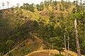 Pinus kesiya forest MtUgo.jpg