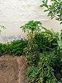 Plants in Sector 28 Faridabad 6.jpg