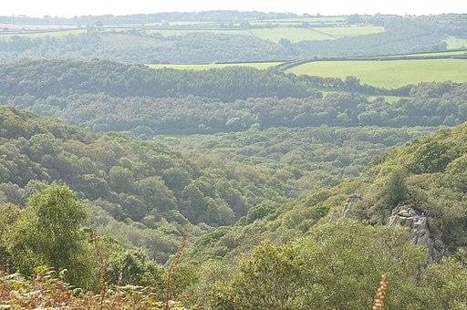 Plym valley near Shaugh Bridge (6396)
