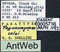 Pogonomyrmex colei casent0005716 label 1.jpg