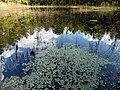 Pond Cameron NC 3861 (15753771865).jpg