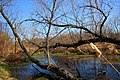 Pond off of the Bugline Trail - panoramio.jpg