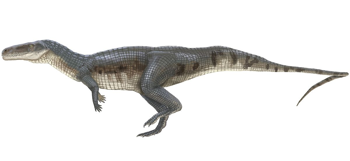 Resultado de imagem para ornithosuchidae