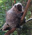 Porcupine-BioDome-2.jpg