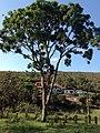 Posse, Teresópolis - RJ, Brazil - panoramio (19).jpg