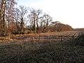 Potato field - geograph.org.uk - 1670269.jpg