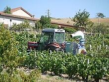 Traitement de la vigne wikip dia - Traitement de la vigne ...