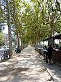 Quai Victor-Augagneur Lyon trees.JPG