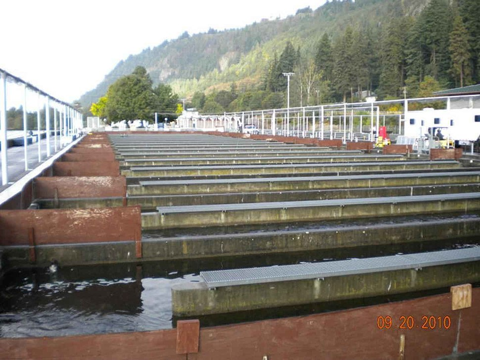 Photo of raceways as at U.S. Fish and Wildlife Service fish hatchery