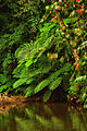 Rainforest pool ferns.jpg