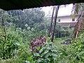 Rainy Day - panoramio (1).jpg