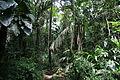 Raphia trail (5550778062).jpg