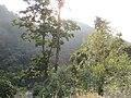 Ravangla, Sikkim by Masum Ibn Musa (197).jpg