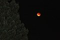 Redwoods and Red Moon. (39984009352).jpg