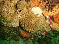 Reef assemblage at Rheeder's Reef P2277151.JPG