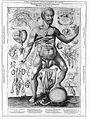 "Remmelin ""Catoptrum..."", 1619; male figure Wellcome L0010177.jpg"