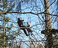 Rescue at GoApe, Wendover Woods - geograph.org.uk - 1237157.jpg