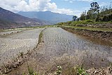 Rice terraces, Sopsokha, Bhutan 02.jpg