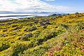 Ring of Kerry Landscape (19380051162).jpg