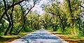 Road in Khushab District - LogoLicious 20180208 204156~2.jpg