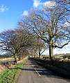 Road to Ogle - geograph.org.uk - 119397.jpg