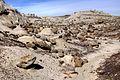 Rock Field (4406917102).jpg