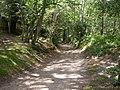 Rockford, track - geograph.org.uk - 1450956.jpg