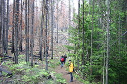 Forest ecology - Wikipedia