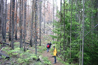 Forest ecology - Forest ecologists are interested in the effects of large disturbances, such as wildfires. Montana, United States.