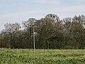Rookery southwest of Nunley Farm - geograph.org.uk - 1803685.jpg
