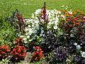 Rose Garden. Mixed flowers. White. - Margaret Island, Budapest, Hungary.JPG
