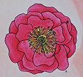 Rosenblütenfüllung Halbgefüllt (10-19 Petalen).jpg