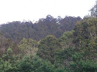 Round Mountain (Northern Tablelands) - Radar station, Round Mountain