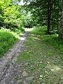 Route forestiere du bois belle fille 2.JPG