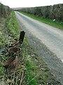 Rusted milk churns on road from Pantyfallen Farm - geograph.org.uk - 153219.jpg