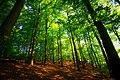 Söderåsens nationalpark forest.jpg