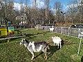 Służew House of Culture goats 1.jpg
