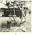 SCHWAB(1947) Fig. 036k.jpg