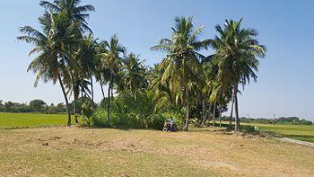 SPR Farm 02.jpg