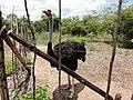 Salima, Malawi - panoramio (8).jpg