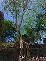 Sangkat Nokor Thum, Krong Siem Reap, Cambodia - panoramio (49).jpg