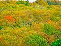 Sasso Pisano, autunno.JPG