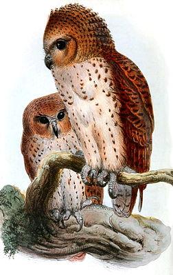 картинки про сову
