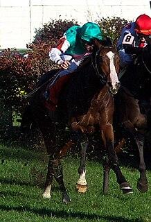 Sea Moon British-bred Thoroughbred racehorse
