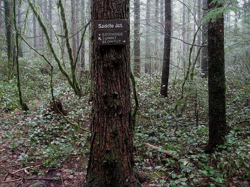 File:Seattle 037 - Flickr - brewbooks.jpg