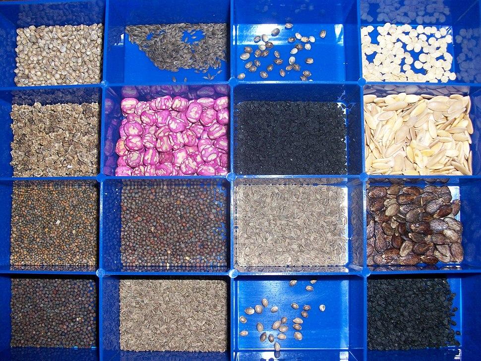 Seed variety