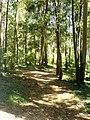 Serra da Boa Viagem - panoramio.jpg